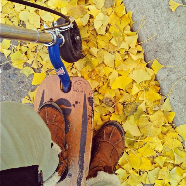 I missed you, dear kick scooter. #nyc #lowermanhattan #kickscooter #goped #autumnleaves