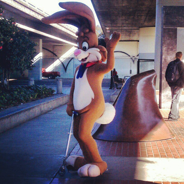 Feels good to be back in the bay #rabbit on a #razorscooter #letsgetweird