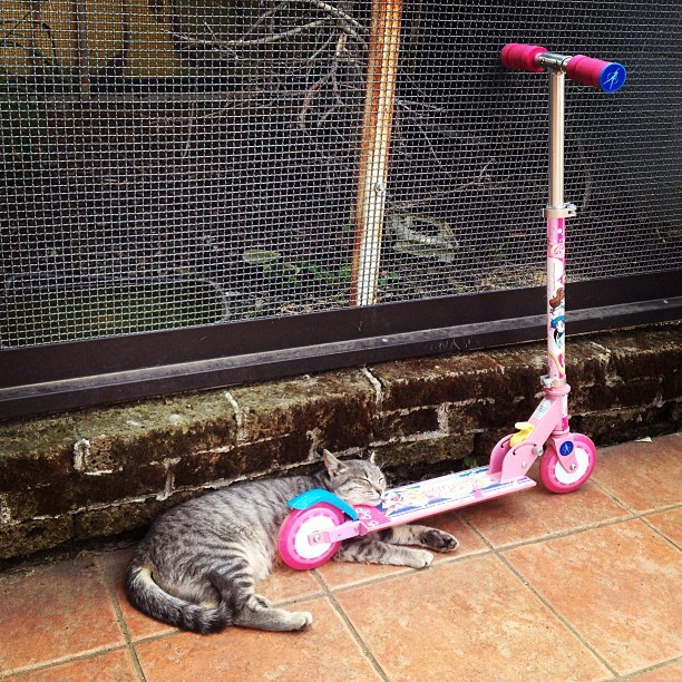 #cat #position #sleepingcat #instacat #monopattino #roller #skate #instapic #italia #instacool #instagood #instamood #instadaily #instaitalia #in