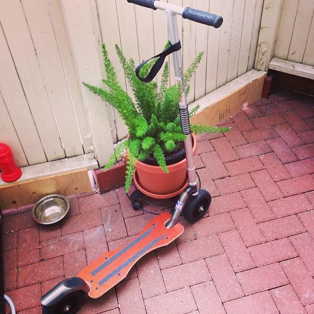 A partir de lundi je recommence à aller travailler sur 2 roues. #trotinette #scooter #kickscooter