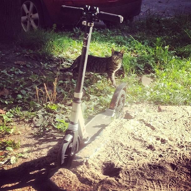 Ах какой #самокат! #котег #кот #oxelo #cat #instafun #sun #scooter #смешно