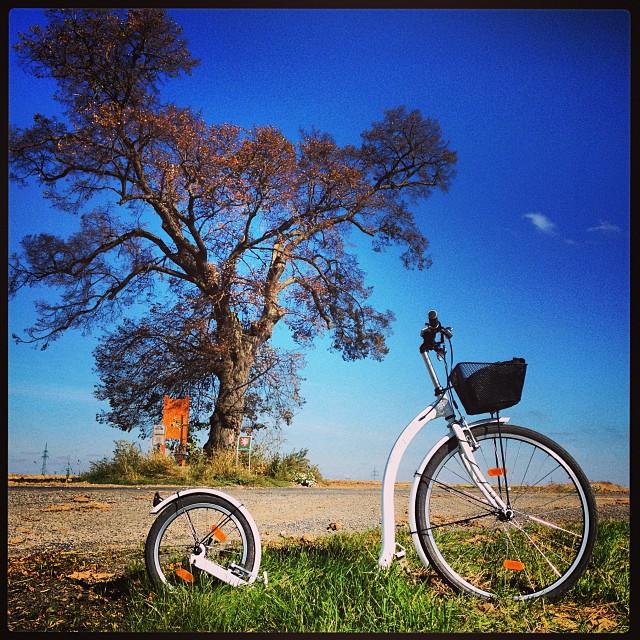 #autumn coming. #windy #tree #kickbike #kolobka #koloběžka #footbike