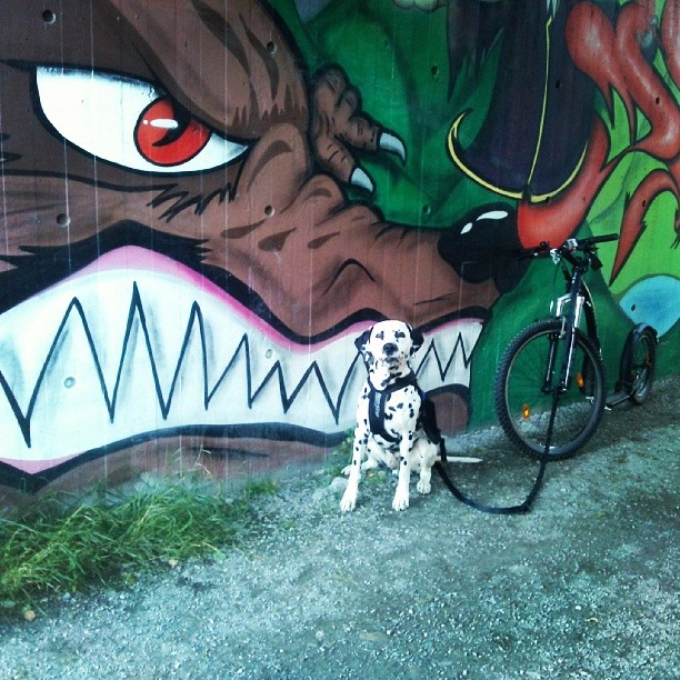 #dalmatian #dalmatiner #kickbike