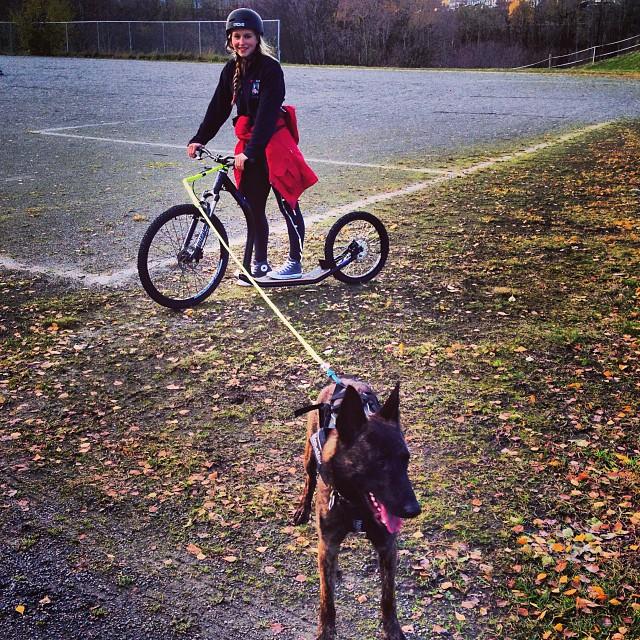 Kickbike med Fritz #kickbike #crazy #dog #lærærnshundogsånn #forsvaret