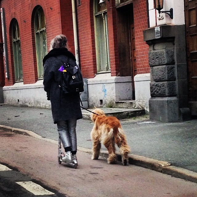 Forever young #kickbike #dog #respect #trondheim