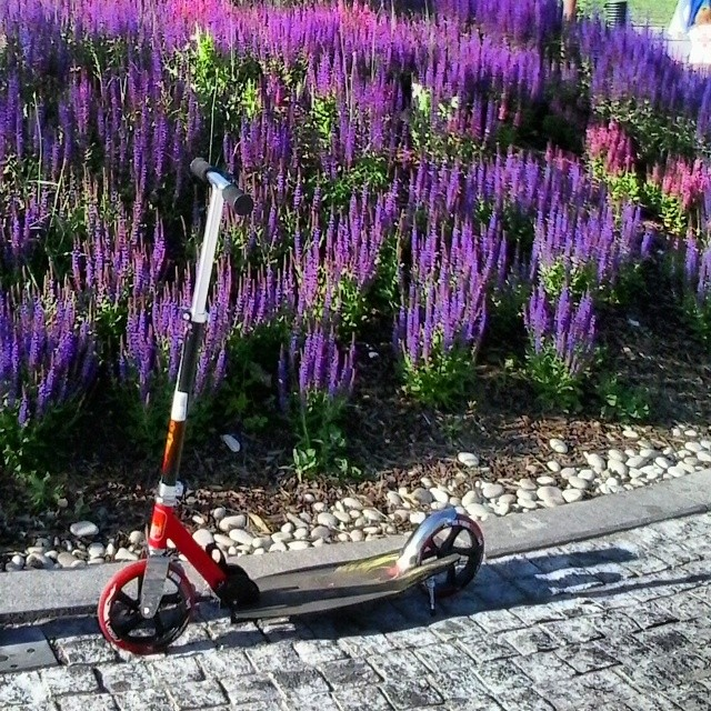 #музеон, #самокат, #scooter