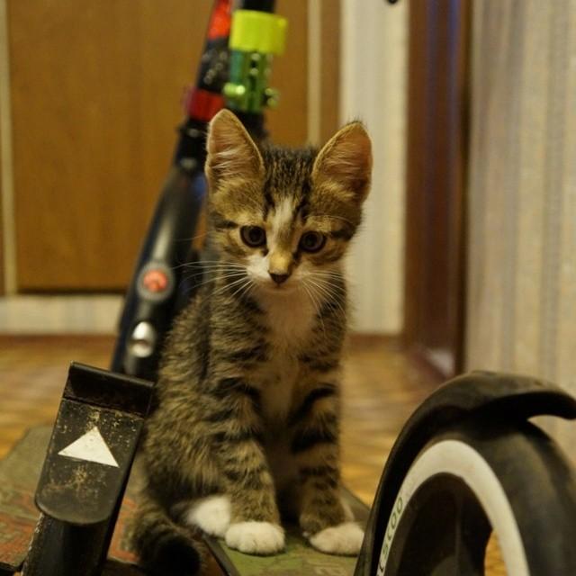 Автор фото: zelenaya_koshka