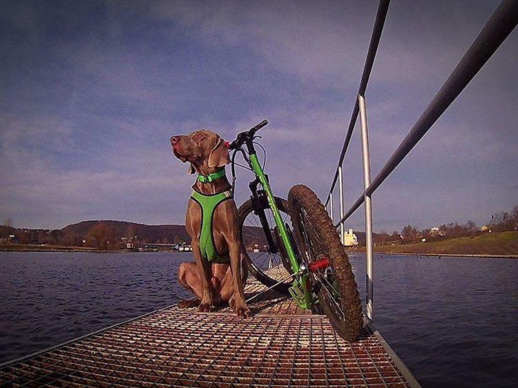 Автор фото: dogs_service