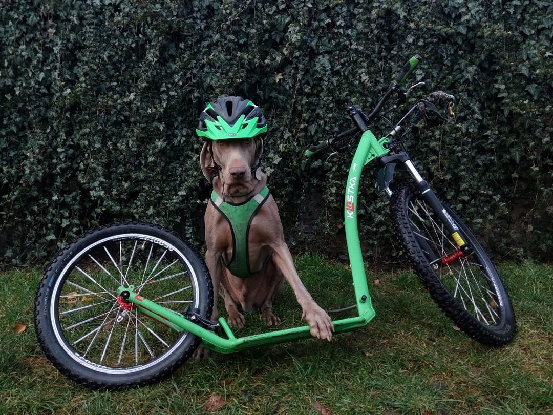 Автор фото: dogs_service.cz